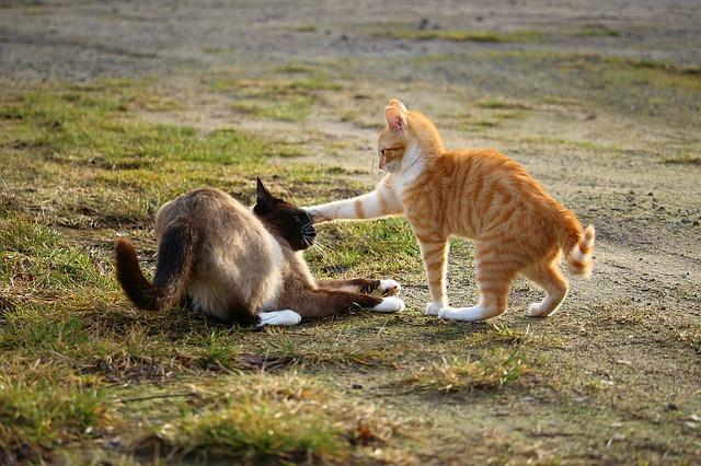 クロネコヤマトの闘い